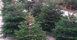 Karácsonyfa kiszállítás