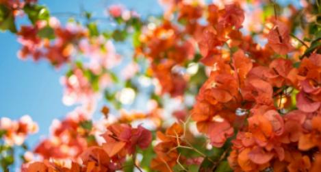 Mediterrán kavalkád kertészetünkben